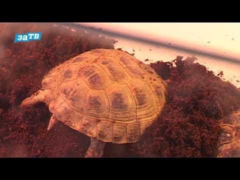 Вопрос: Как найти различия между морской, пресноводной и сухопутной черепахами?