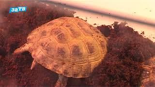Планетa ZOO// Все о содержании сухопутных черепах.