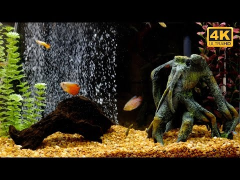 Soothing Freshwater Aquarium Atmosphere In 4k Ultra HD For TV