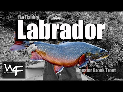 W4F - Fly Fishing Brook Trout - Labrador Canada