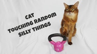 CAT TRAINING: TOUCHING RANDOM SILLY THINGS | Funny Cat Tricks Video