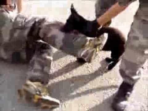 bondage training pup k9