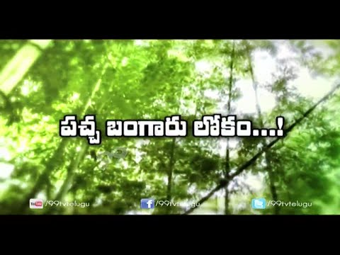 How to Cultivate Bamboo || Bamboo Cultivation || Eruvaka | 99tv