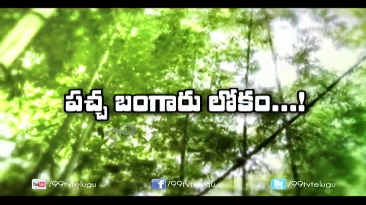 How to Cultivate Bamboo    Bamboo Cultivation    Eruvaka   99tv