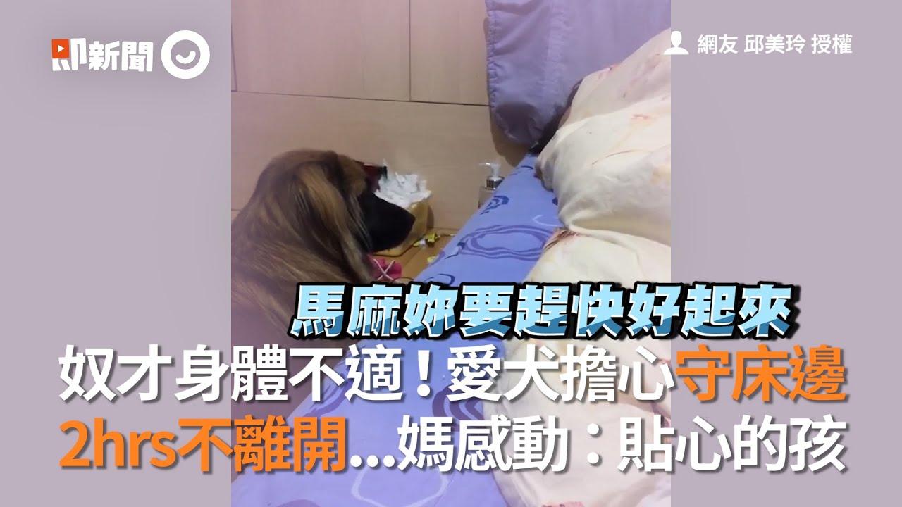 主人身體不適...米克斯狗狗擔心守床邊2小時不離開  她感動:貼心的毛小孩|寵物