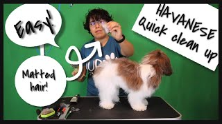 How To Groom A Dog At Home l Quick Clean Up (Havanese)
