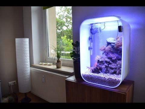 BiOrb Marine Reef Tank - Meerwasseraquarium