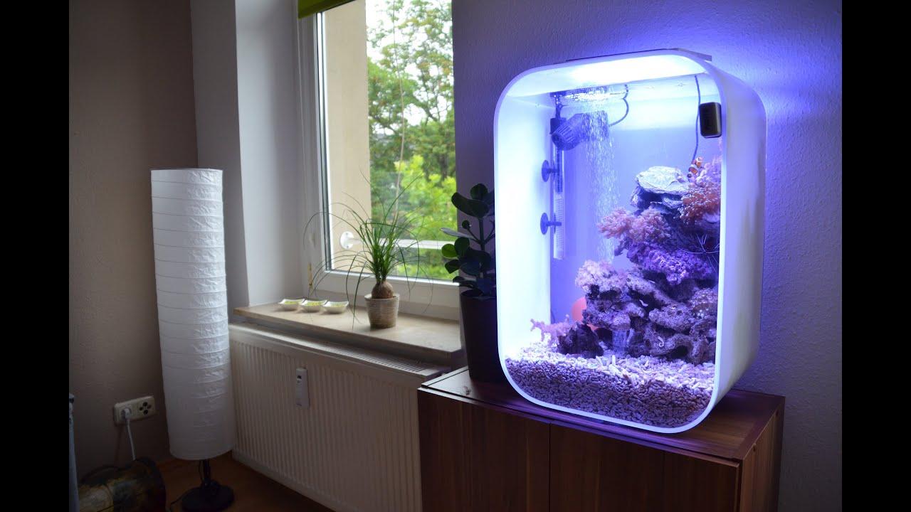 Biorb Marine Reef Tank Meerwasseraquarium Youtube