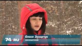 Челябинские зоозащитники ищут убийц собак