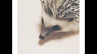 ハリー #hedgehog #pet #cute #animal #癒し #元気でる #ハリネズミ.