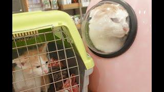 고양이 예방접종 3마리 병원 데려가기 힘든 집사..