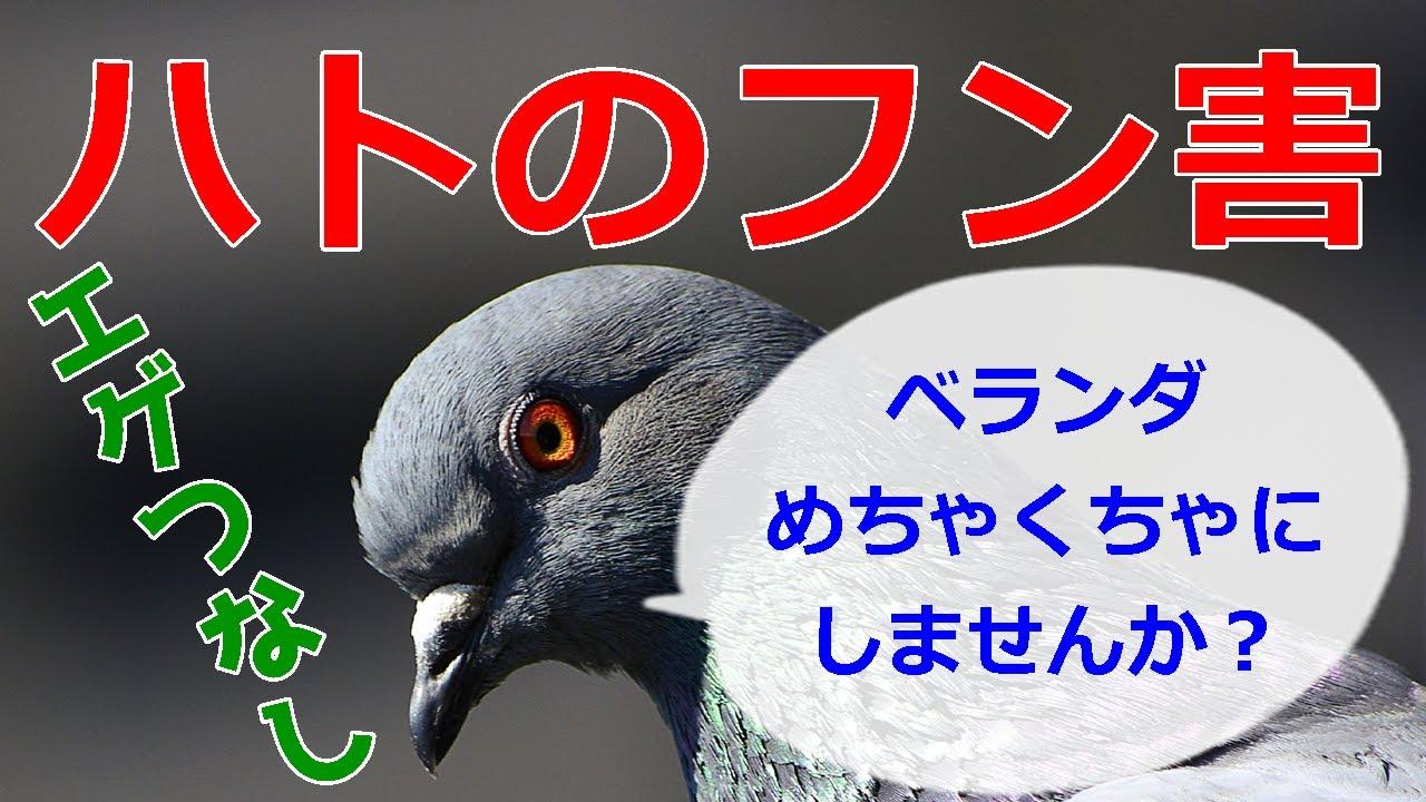 フン 鳩 掃除 の