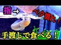 ベタ慣れの魚!手から餌を食べる!【25cm水槽】 の動画、YouTube動画。