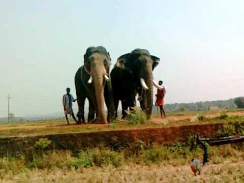 Thiruvambady Shivasundar And Pampady Rajan.mp4