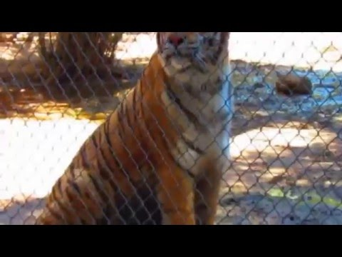 PHX WILDLIFE WORLD ZOO vlog