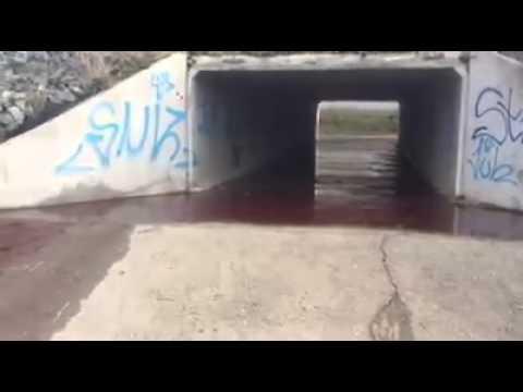 Un matadero de Toledo causa un enorme vertido de sangre cerca de la cuenca del Tajo