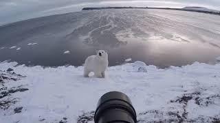 Amazing Footage