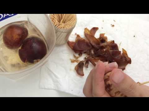 HOW TO CLEAN A AVOCADO SEED SHELL (TALK THREW VIDEO)