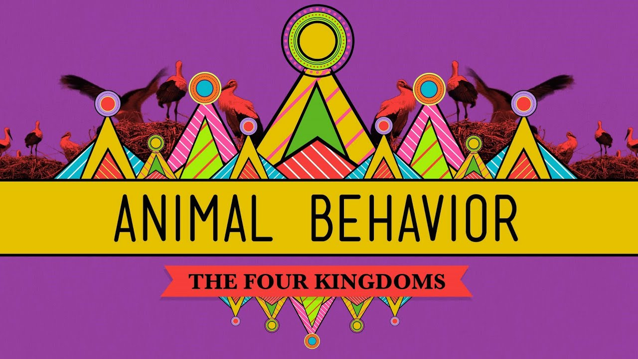 Animal Behavior Crashcourse Biology 25 Youtube