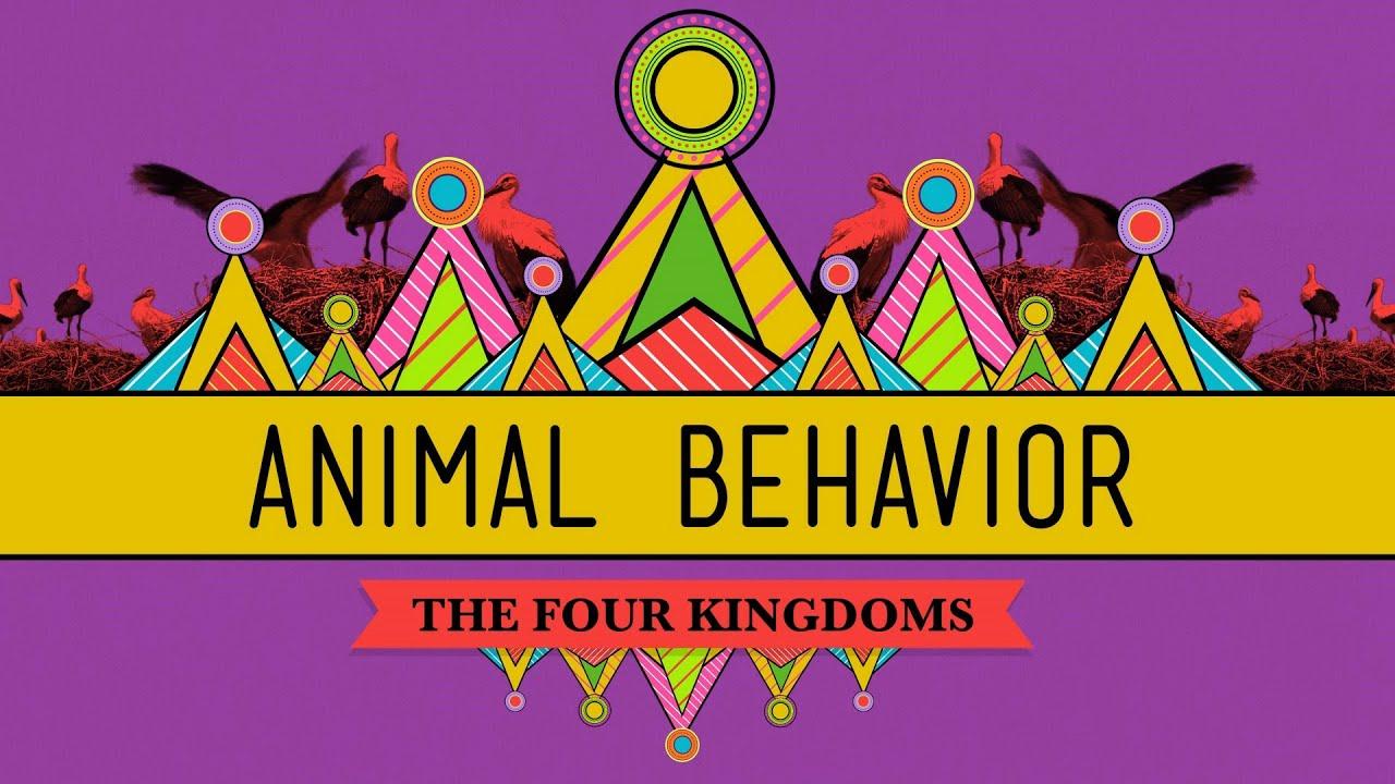 Animal Jam Inappropriate Behavior