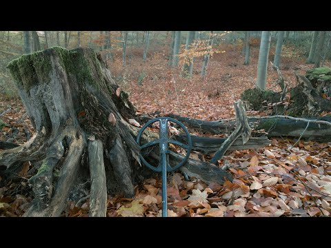 Out Of Nowhere | The Unknown Forest And The Surprising Finds
