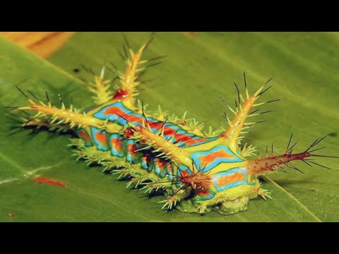15 Most Dangerous Insects In The World