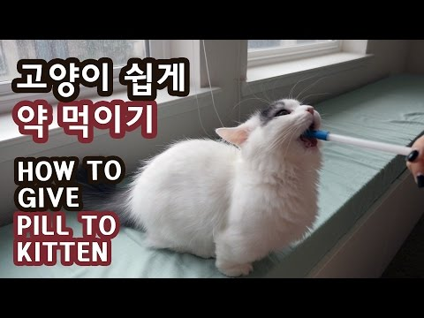 고양이 쉽게 약 먹이기 HOW TO GIVE A PILL TO KITTEN EASILY