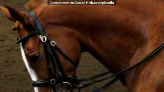 Лошади,фото под музыку