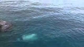 سقوط سيارة بعرض البحر في جيجل .. ومقتل الراكبين