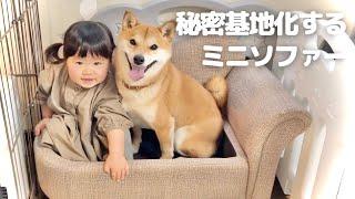 -------------------------------- 柴犬のりんご郎2018.1生 娘2019.3生 -------------------------------- チャンネル登録はこちらから ...