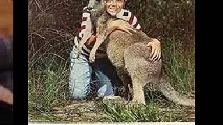 Skippy the Bush Kangaroo Slide show