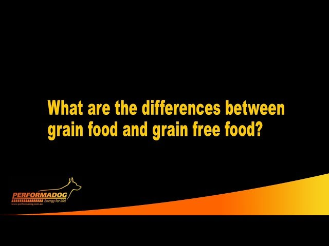What are the differences between grain food and grain free food? - Performadog
