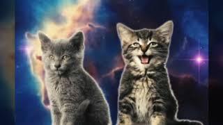 Котята и девочки красивые  картинки!💜