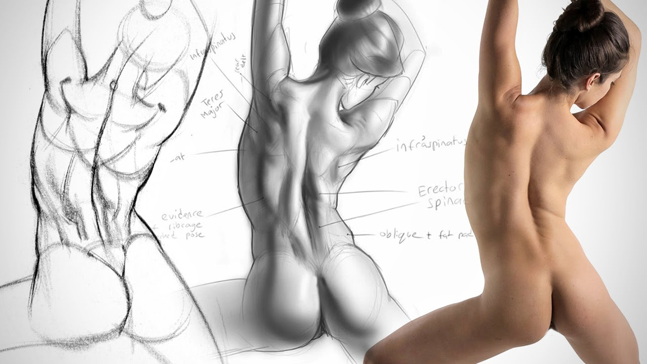 Anatomy Drawing Critiques - The Lower Back - YouTube