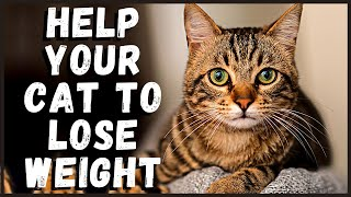 Help Your Cat to Lose Weight
