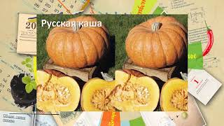 "СеДек ""Тыква"". Совет дня."