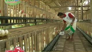 Daily routine ng isang layer farmer