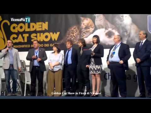 Dalla Vicenza dei magnagatti al Golden Cat Show