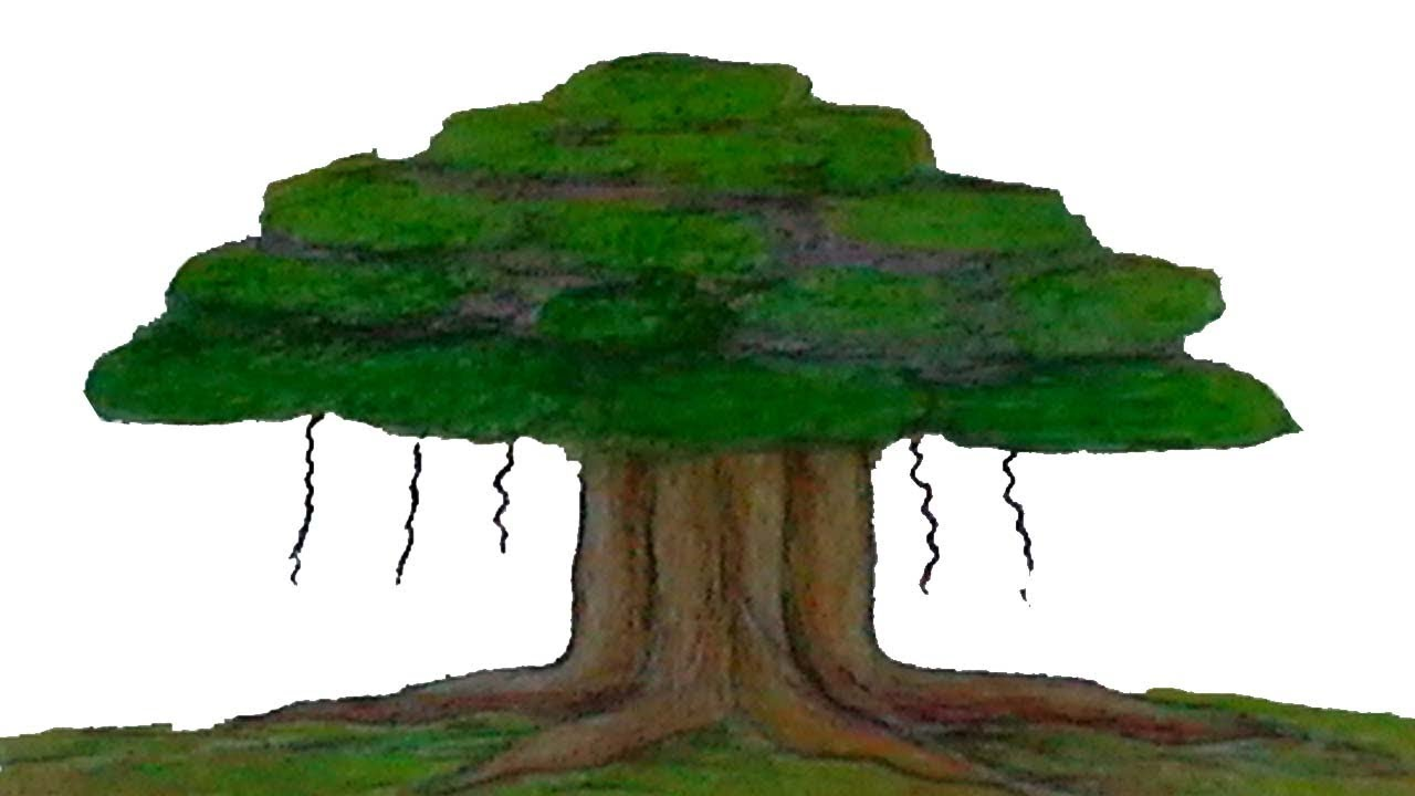 how to draw a Banyan tree step by step drawing and coloring for kids ...