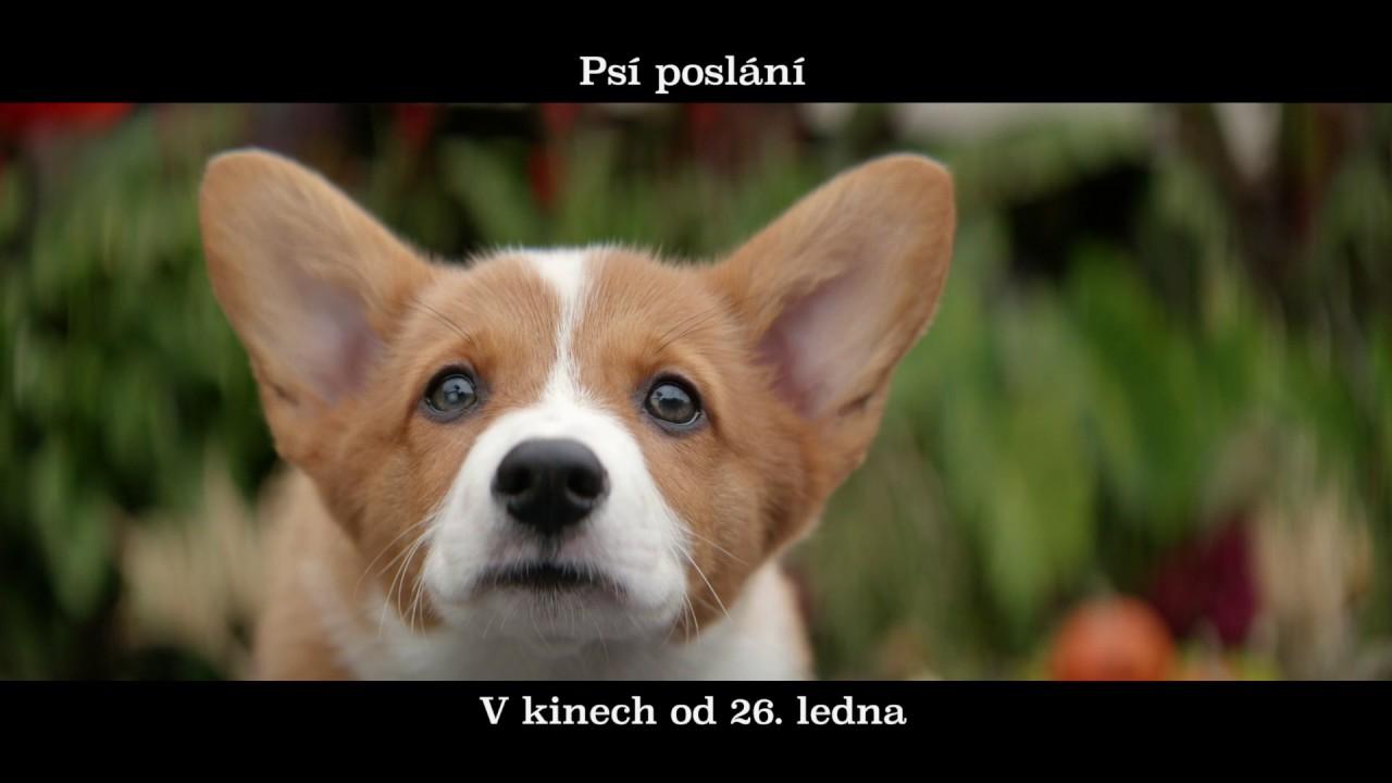 www milujeme filmy cz www freevideo com