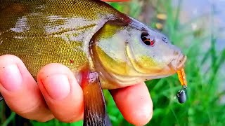 ВОТ ТАК ДА Поймал ЛИНЯ на спиннинг второй день подряд Рыбалка на микроджиг Ловля окуня летом