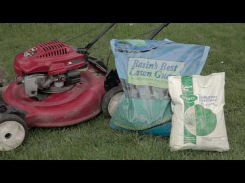 How to Care for Your Lawn – The Basics
