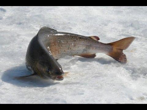 Рыбалка на хариуса.