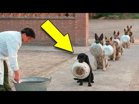 | the most Disciplined Dogs in the world