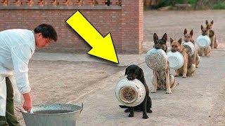 इनसे ज़्यादा समझदार कुत्ते नहीं देखे होंगे कहीं | the most Disciplined Dogs in the world