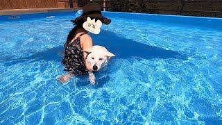 애견펜션에 수영하러 갔더니 찐빵 됨...ㅣ시골에서왔설동