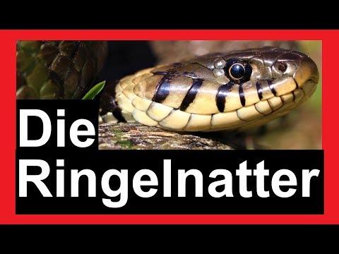 Schlangen in Deutschland