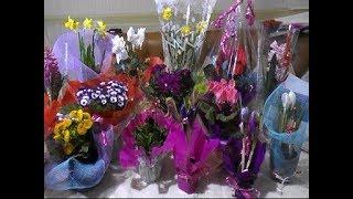 видео Комнатные цветы в подарок