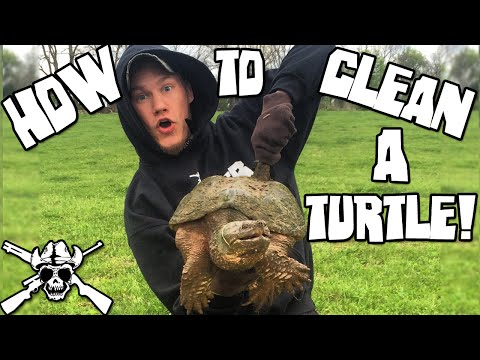 How To Clean a Snapping Turtle!