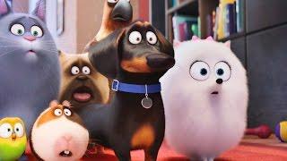 Тайная жизнь домашних животных   смотреть мультфильм 2016 HD